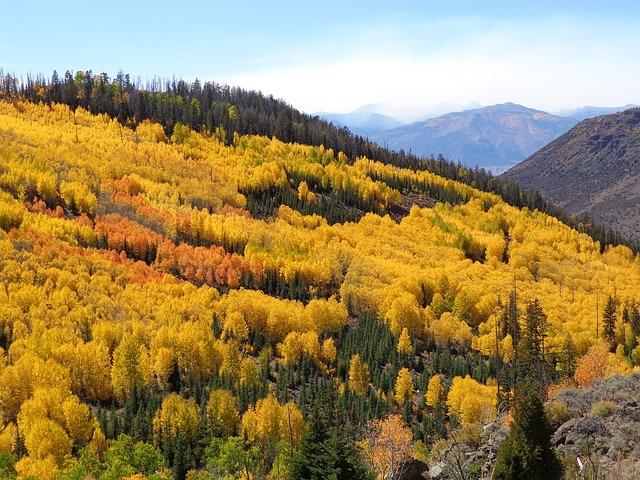 Utah Fall Foliage Leaves