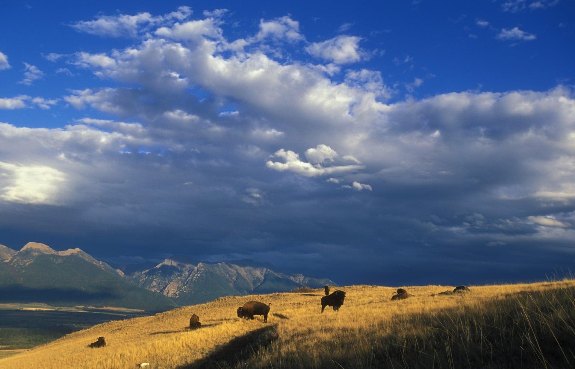 national bison range montana