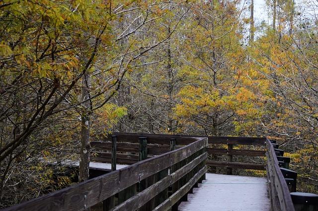 Fall Florida foliage hiking