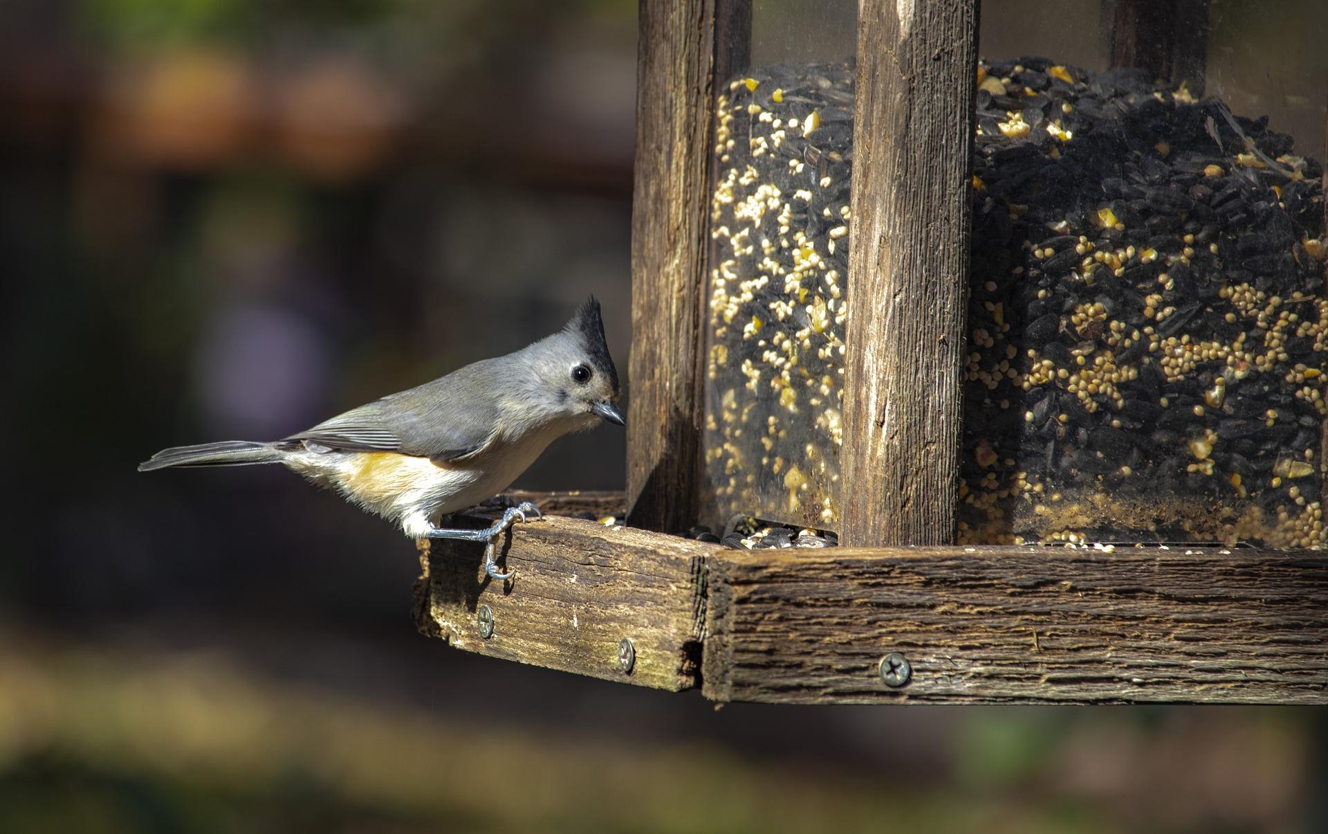 bird feeder pixabay
