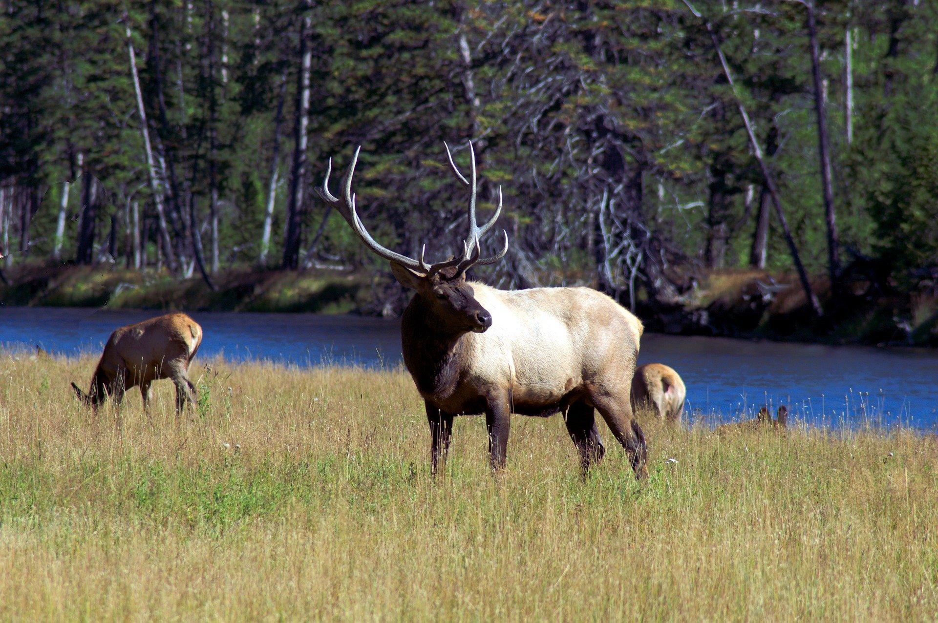 elk river woods pixabay