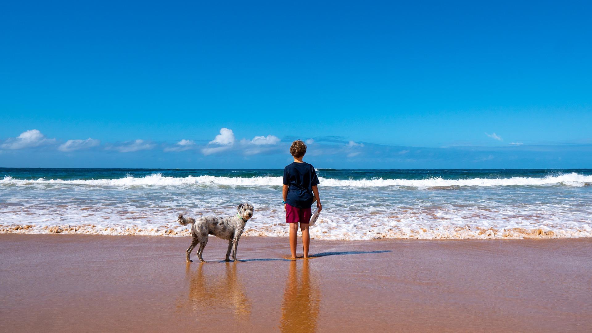 beach dog frisbee boy pixabay