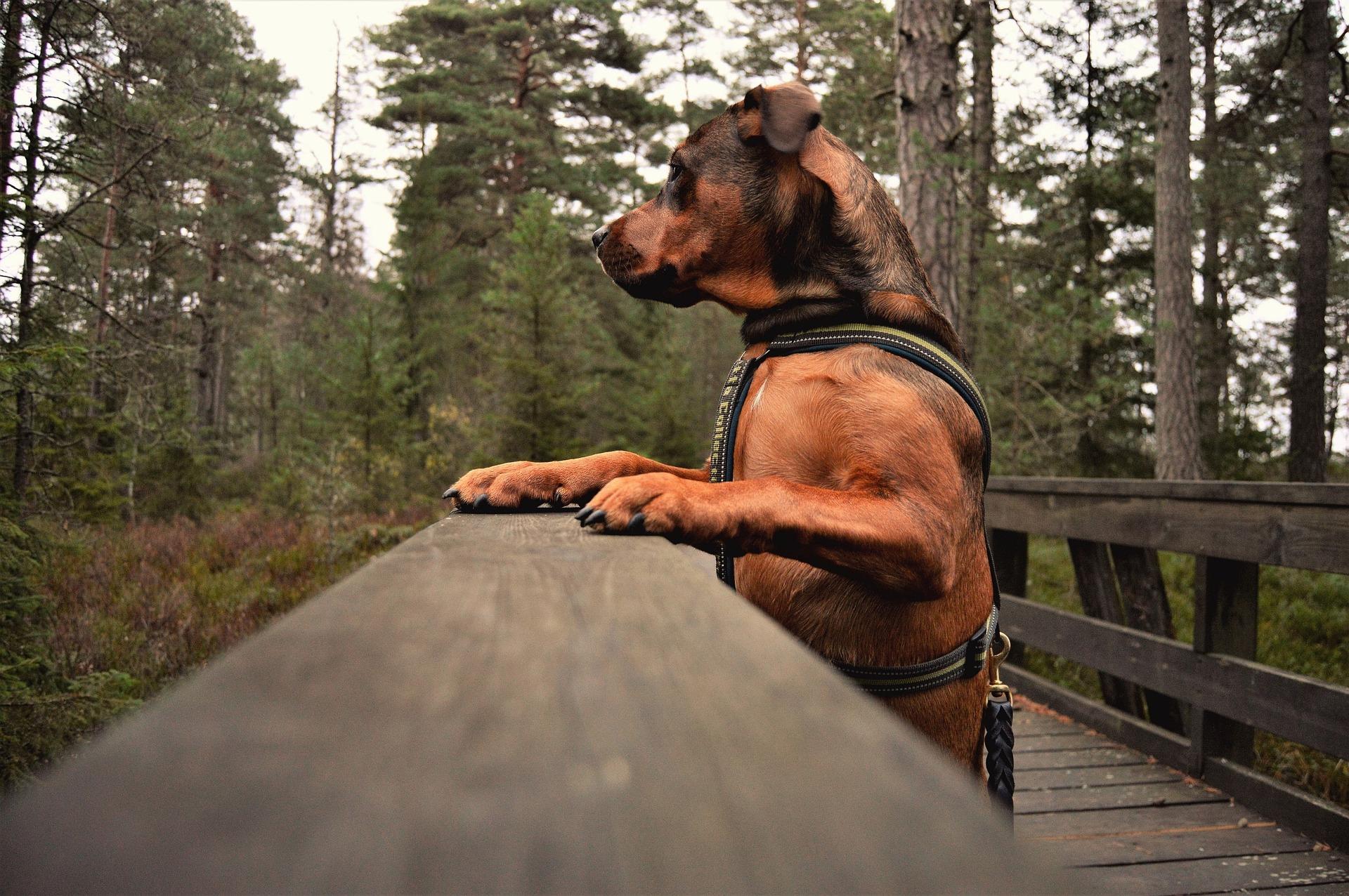 dog outdoors park pixabay