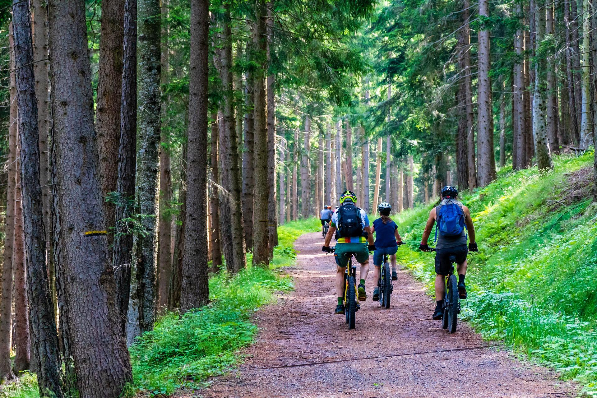 forest mountain biking trail pixabay