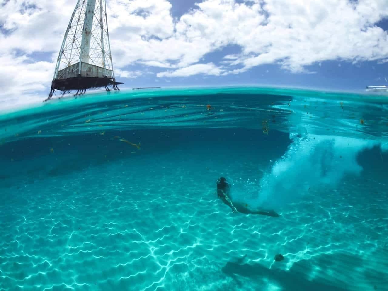 alligator lighthouse swim
