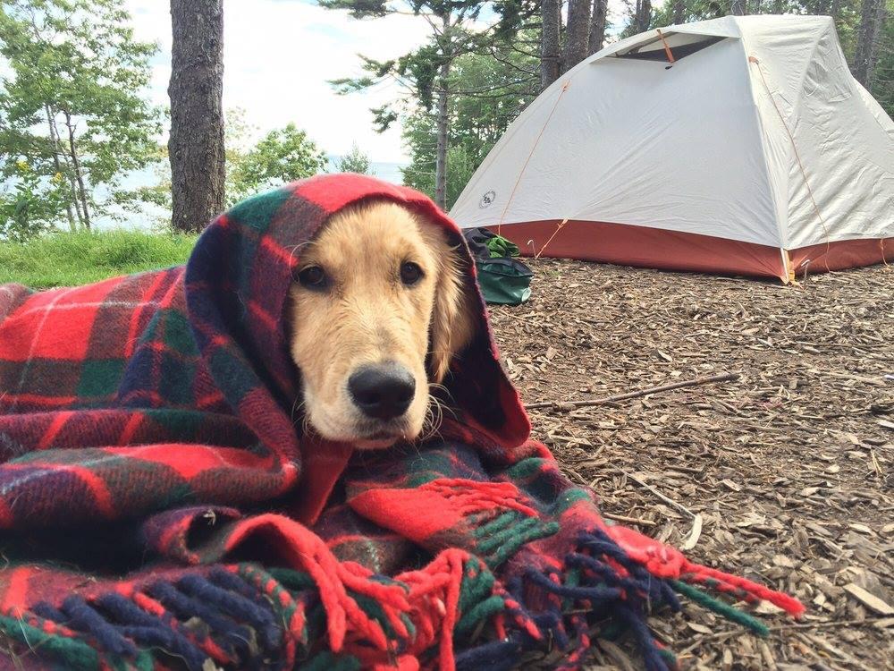 Sagadahoc Bay Campground dog