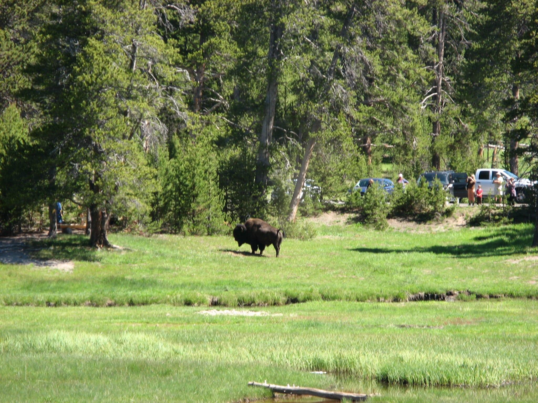 norris campground yellowstone